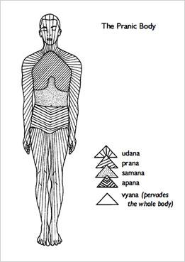 The 5 Pranas in Yoga, Pranamaya Kosha, Prana and Pranayama